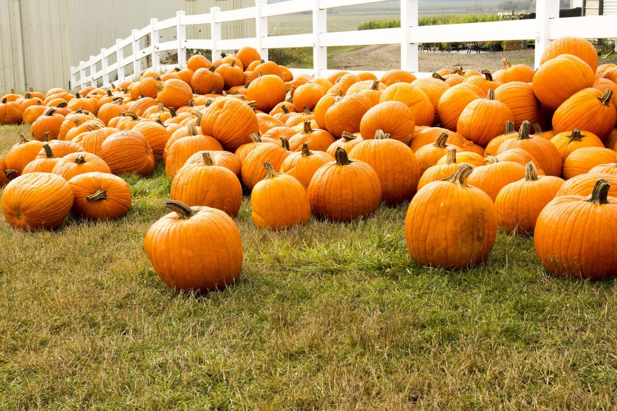 The Best Pumpkin Patches in Arizona
